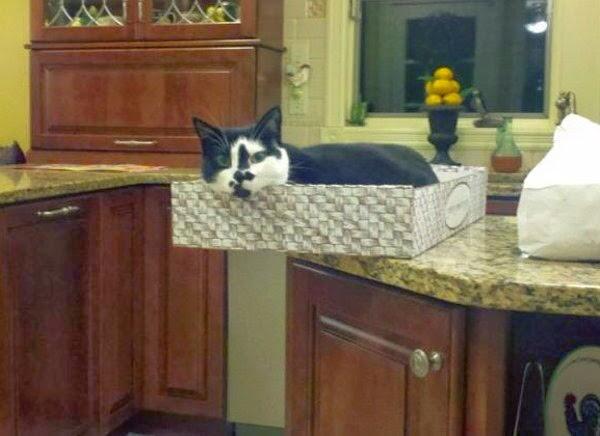 600-cute-cat-pictures-094-012