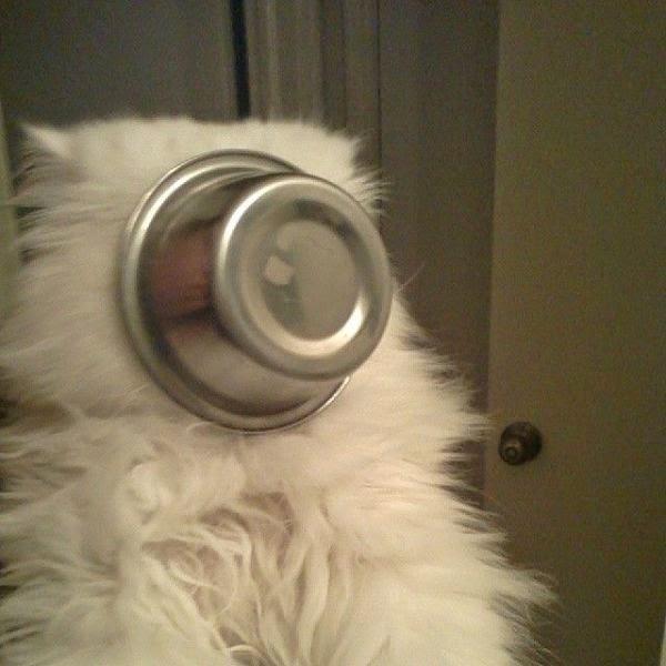 600-cute-cat-pictures-102-037