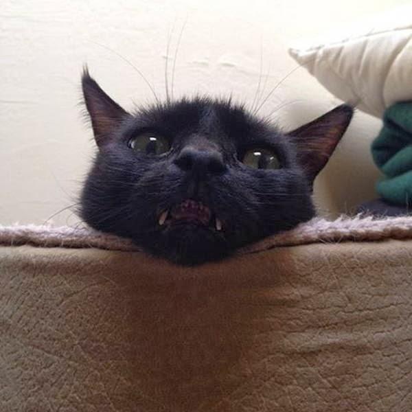 600-cute-cats-087-037