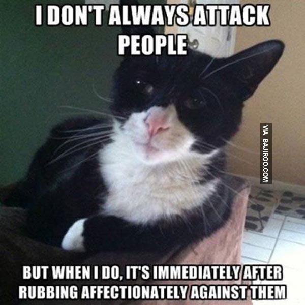 600-funny-cat-attack-people-meme
