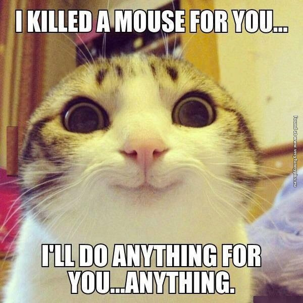 600-funny-cat-pictures-overly-attached-kitty