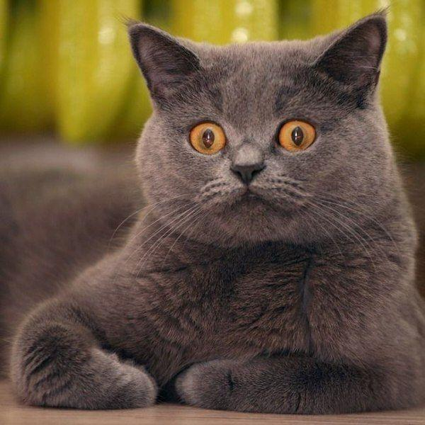 600-funny_cats_expression_1018