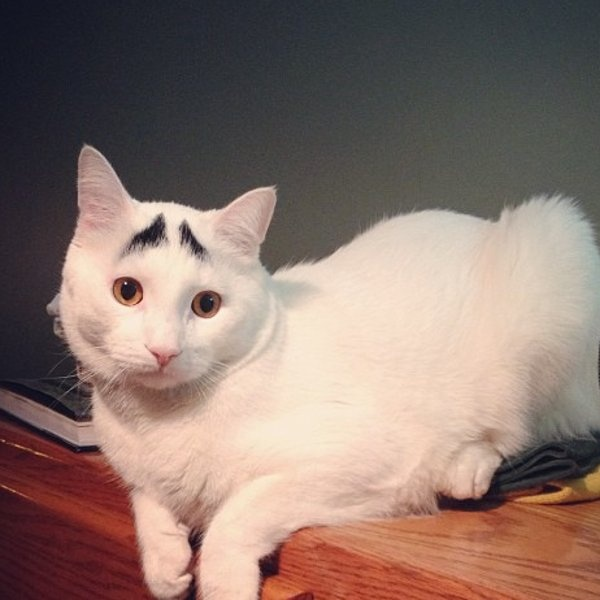 600-sam cat with the eyebrows