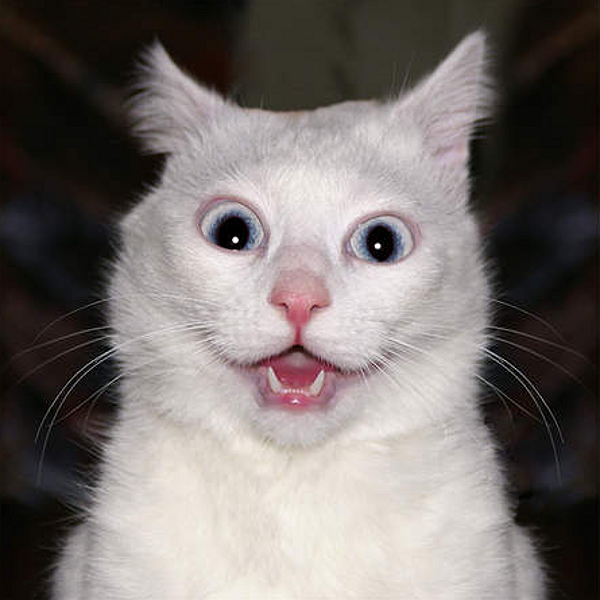 600-shocked-white-cat