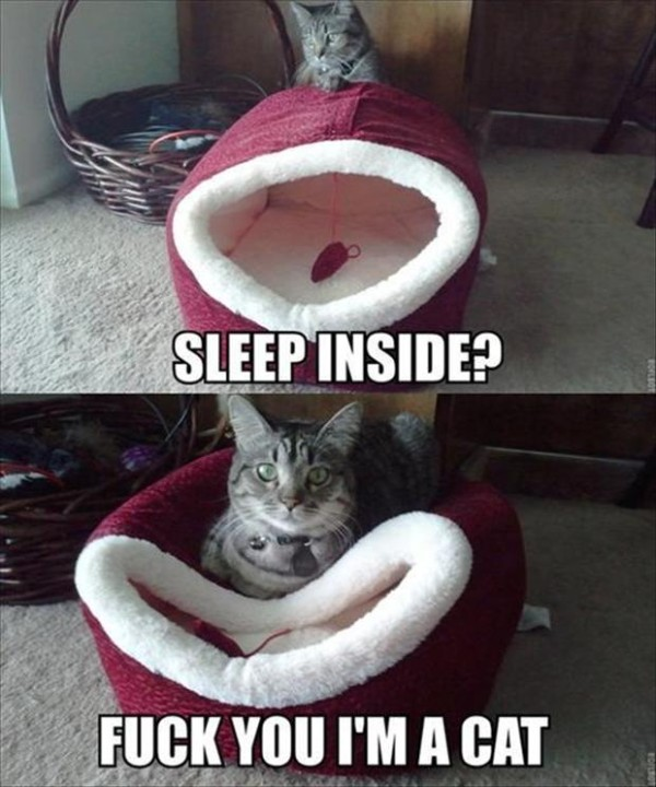 funny-cats-22