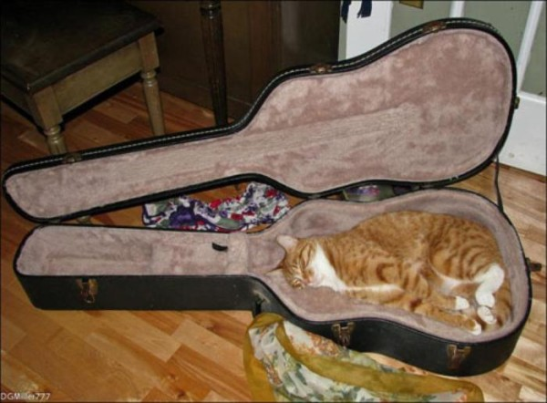 the-most-amazing-cat-sleeping-poses10