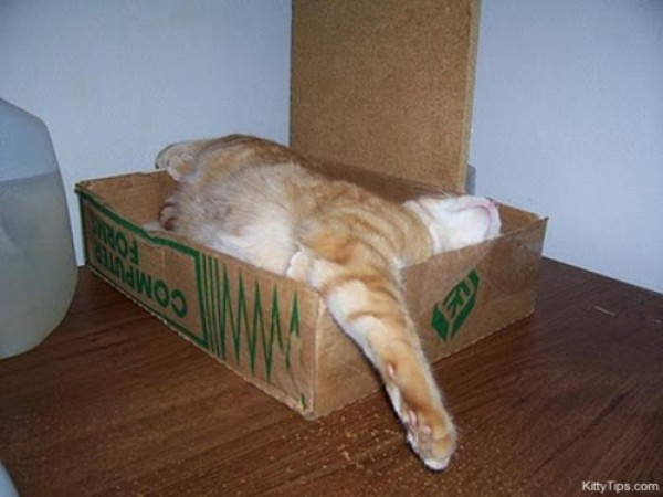 the-most-amazing-cat-sleeping-poses11