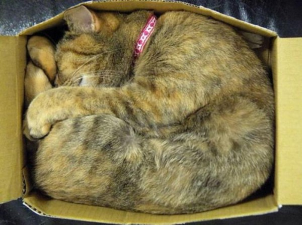 the-most-amazing-cat-sleeping-poses14