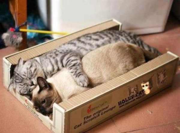 the-most-amazing-cat-sleeping-poses15