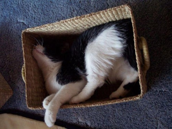 the-most-amazing-cat-sleeping-poses8