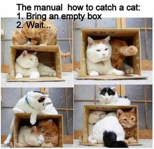 CatTrap