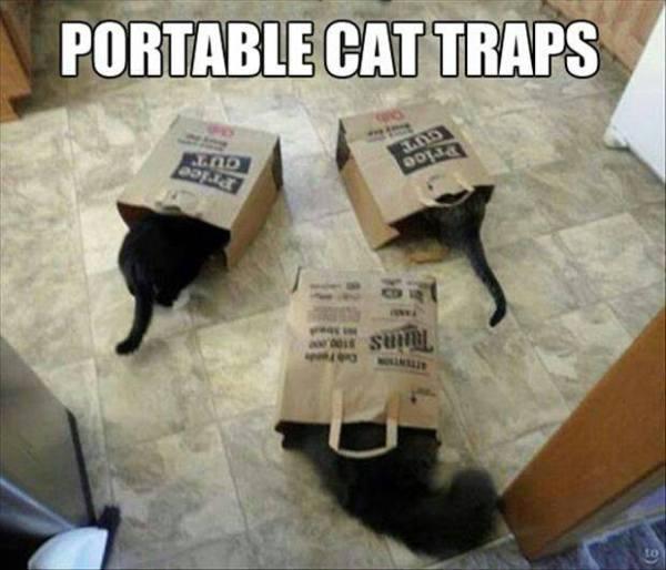 Portable-cat-traps