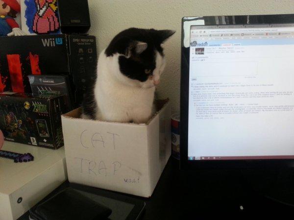cat_trap_17387