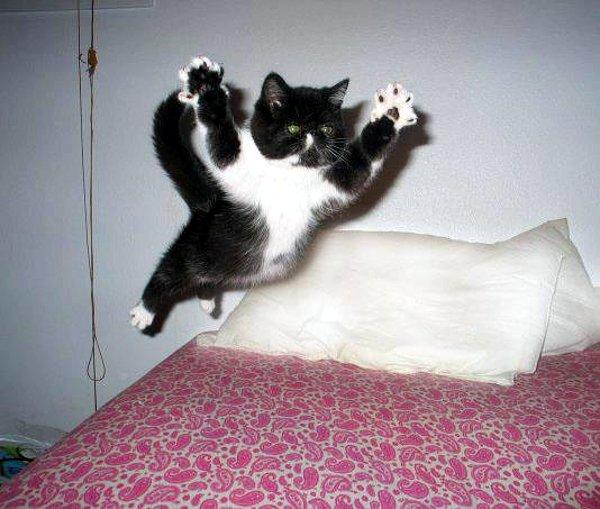 168795-cats-flying-jump-attack-cat