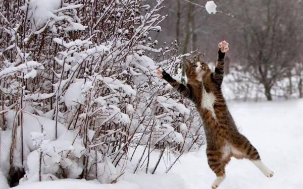 459583-cats-jumping-cat-wallpaper