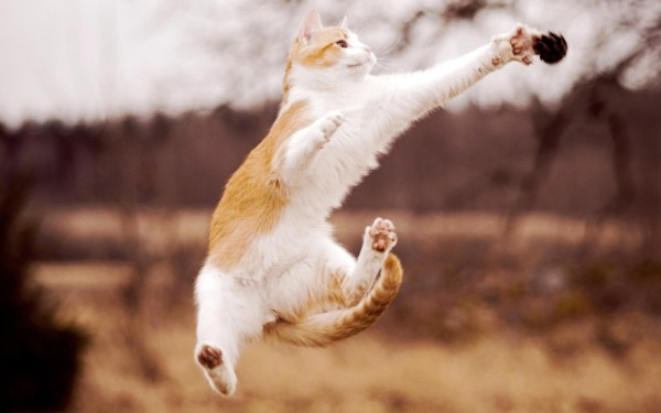 Animals___Cats_Cats_jumping_blurred_background_042167_