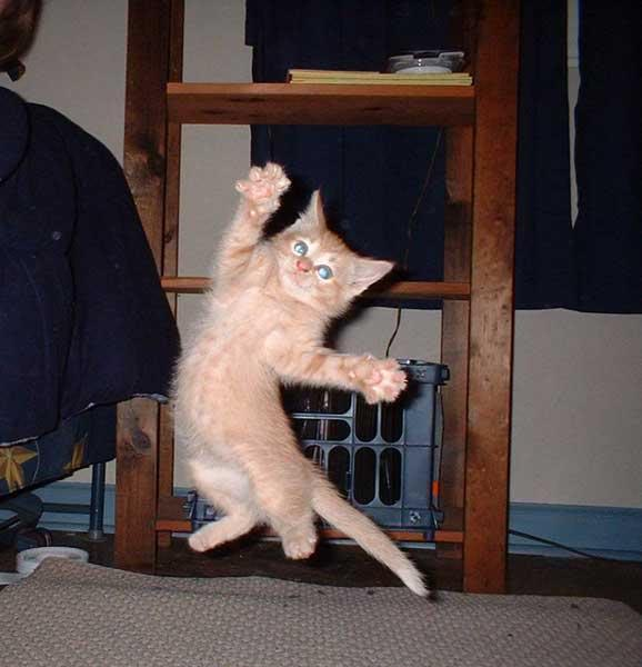Cat-CatJumpingInAir01