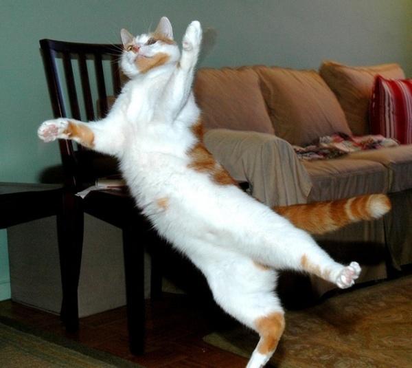Flying_cat_4_by_haytapburcak