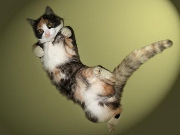 Jumping_Cats_12