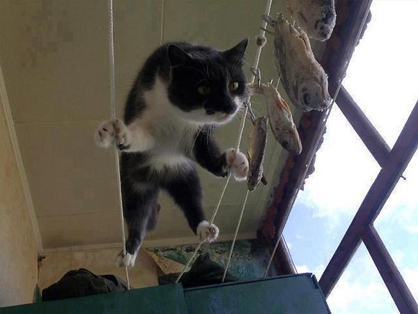 a.baa-ninja-cat-attacks
