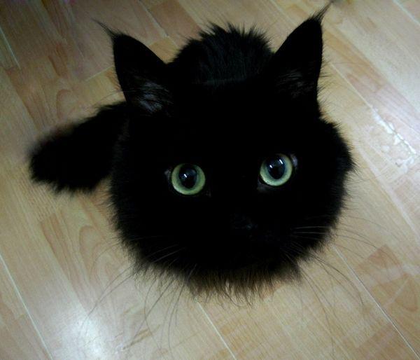 black-cat-furball