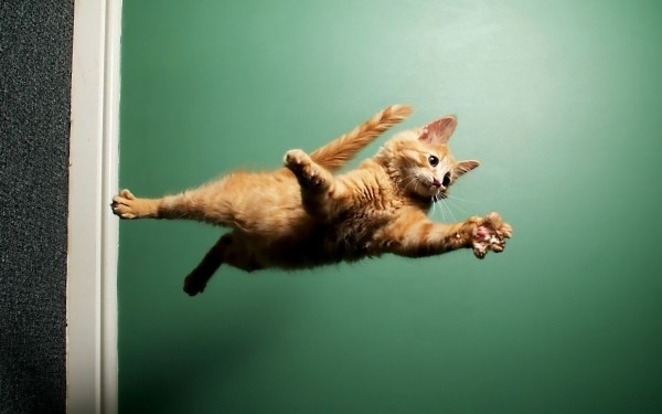cats-animals_00417621