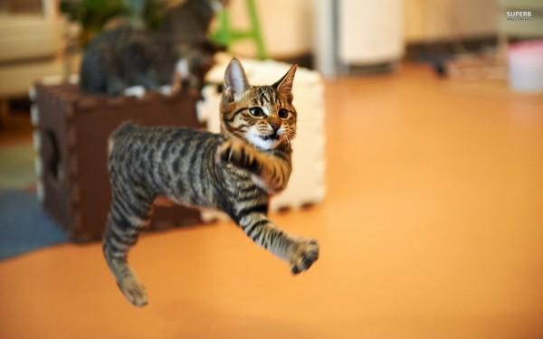 jumping-cat-26068-1920x1200