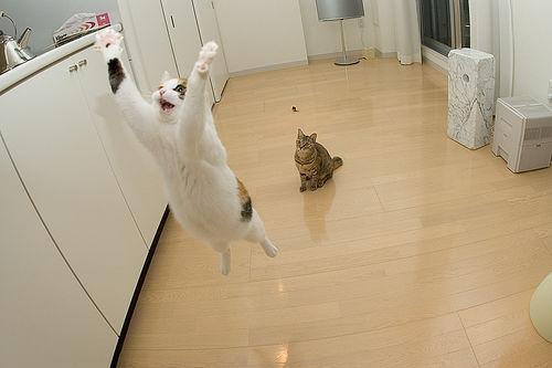 jumping_cats14