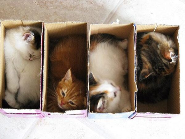 20-Crazy-Cat-Beds-For-Over-Sized-Kitties-5