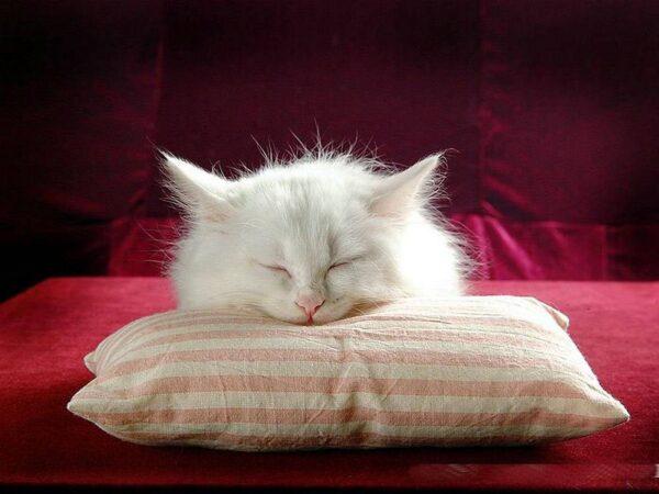 278908-cats-cat