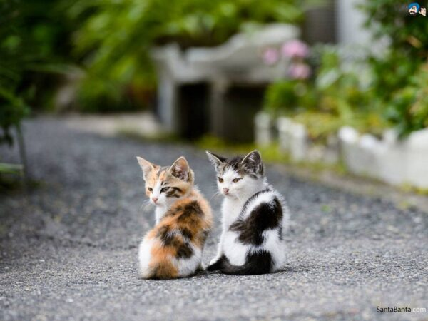 443204-cats-cute-cat-16