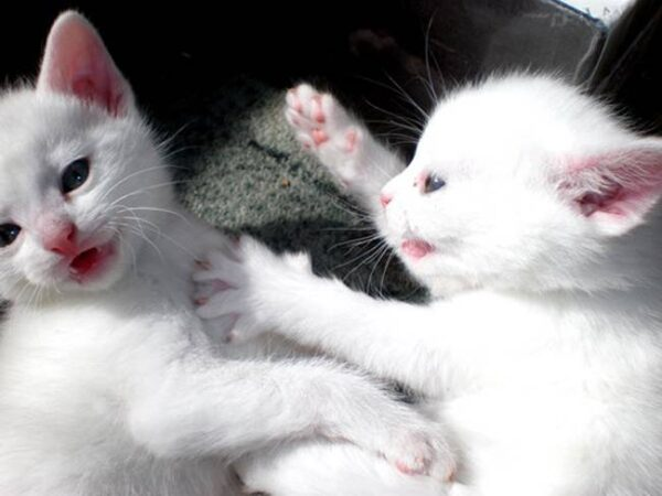445403-cats-cute-cat-21