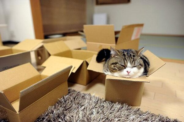 Beds-For-Over-Sized-Kitties-11