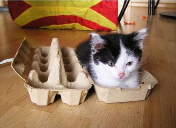 Beds-For-Over-Sized-Kitties-13