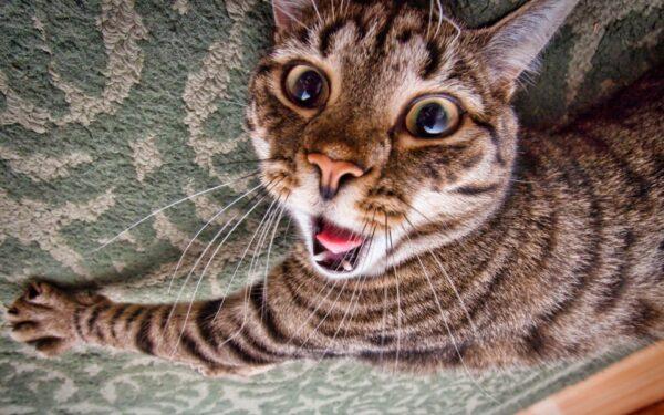 bloody-crazy-cat-wallszone-1496498
