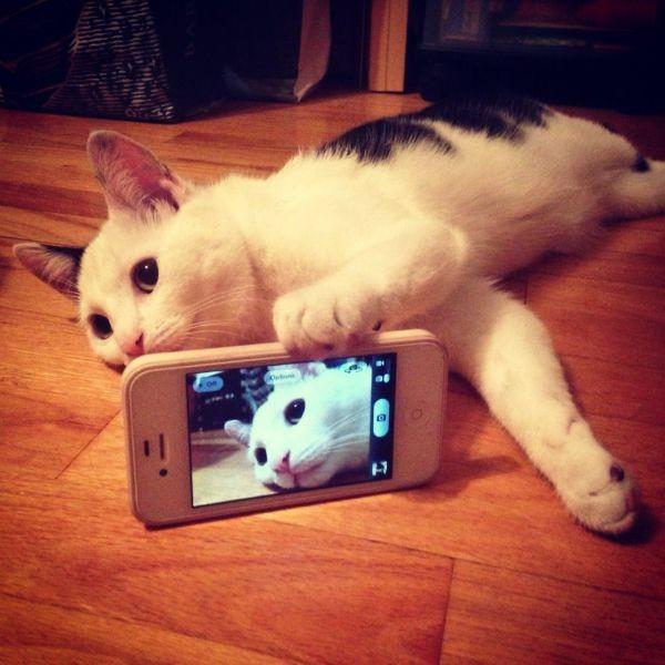 cat-taking-selfie-iphone-camera-13976003326