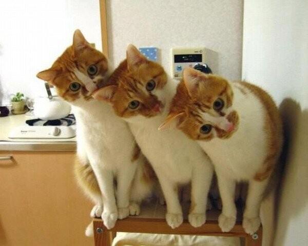 crazy-cats-4