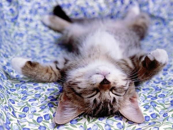 cute-little-kitten-cat-fur-ball