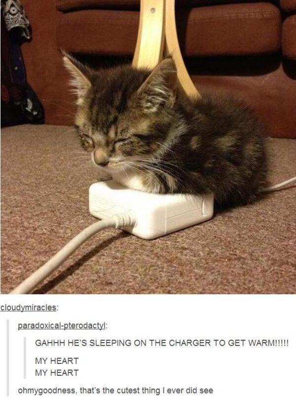 cutest kitten warm charger