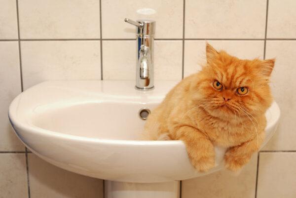 garfi-bathroom-sink
