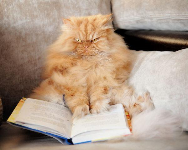 garfi-reading